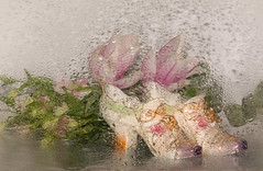 Still life through raindrops (3 of 4) (+Pattycake+) Tags: tabletop plant stilllife macro sigma ©patriciawilden2019 flower magnolia wendy canoneos70d indoor flowers blossoms leaves waterdroplets windowpane pastel colour photo yellow pink white green silver art