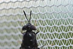 DSC_3193_00001 (redfish1957) Tags: nikond7500 nikon85mmmicro fly flies