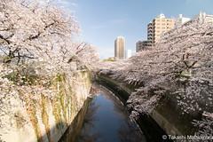Waseda (takashi_matsumura) Tags: waseda shinjukuku tokyo japan ngc nikon d5300 早稲田 新宿区 東京 桜 sakura cherry blossoms afp dx nikkor 1020mm f4556g vr