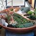 ジオラマのようなおしゃれな鉢植えの写真