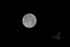 Wolf Moon 2019 from Thessaloniki, Greece (ioannis_papachristos) Tags: fullmoon wolf wolfmoon moon wolffullmoon papachristos thessaloniki greece skg astro astrophotography satellite event january january2019 2019 europe macedonia astronomy backyard backyardastronomy sky indians nativeamericans almanac oldfarmer super supermoon superfullmoon perigee lune lalune canon eosm50 hecate hekatē mythology goddess goddesshecate greek classical fog mist cloud cloudladensky cloudysky macedoniagreece makedonia macedoniatimeless macedonian macédoine mazedonien μακεδονια македонијамакедонскимакедонци