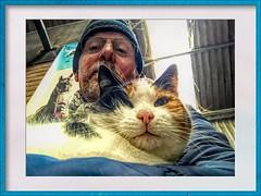 0022 (gill4kleuren - 18 ml views) Tags: pussy puss poes chat mieze katje gato gata gatto cat pet animal kitty kat pussycat poezen
