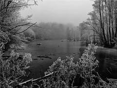 Misty winter mood at the pond (Ostseetroll) Tags: deu deutschland geo:lat=5403077801 geo:lon=1070657719 geotagged klingberg scharbeutz schleswigholstein nebelwinter stimmung teich mist fog winter mood pond schwarzweiss olympus em5markii