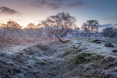 Frosty morning in Suffolk (Simon Brimacombe) Tags: 2019 cold dunwichforest eastanglia frost january suffolk sunrise trees dunwich ferns longexposure