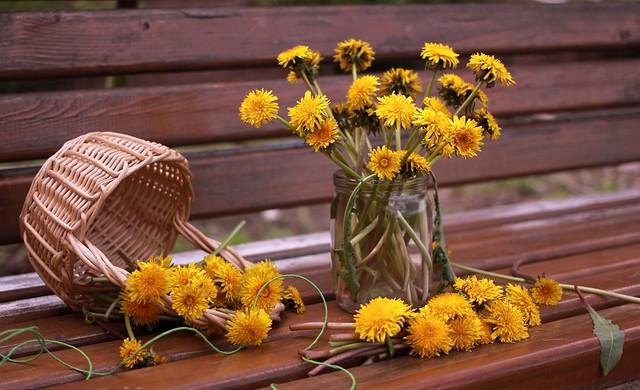 Обои цветы, одуванчики, вазочка картинки на рабочий стол, раздел цветы - скачать