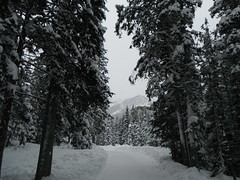 Lake Louise Alberta Canada (Mr. Happy Face - Peace :)) Tags: lakelouise alberta abertabound trees forest hiking parkscanada banffparkway winter activities outdoors cans2s nature mountains trails love flickrfridays art2019 hotel fairmount chateau 25years