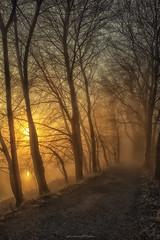 alba sull'alzaia (fabrizio daminelli ) Tags: alba sunrise italy fabriziodaminelli canon lombardy lombardia wildlife natura nature landscape paesaggio sole sun fog nebbia river fiume adda
