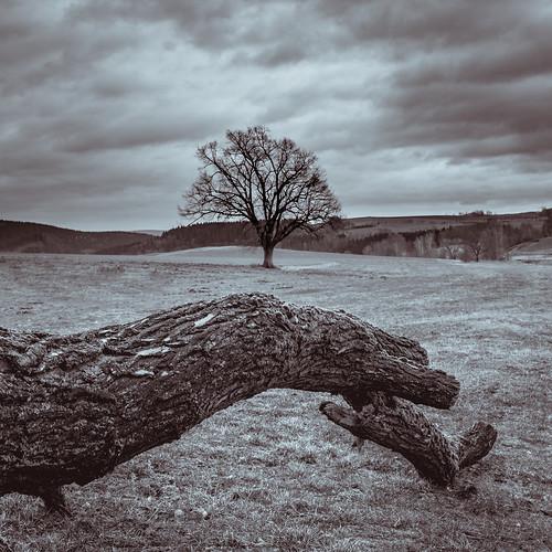 Baum in sw