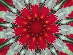 Rote Primel als Kaleidoskop - EffiArt (eagle1effi) Tags: canonpowershotsx70hs canon powershot sx70hs powershotsx70hs eagle1effi bridgecamera effiart effiart2019 2019