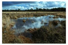 Moor (Eric Rebaser) Tags: leersum leersumseveld ven fenn nature landscape dutchlandscape