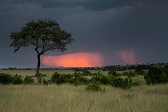 Distant Storm at Sunset (helenehoffman) Tags: africa kenya rain sunset maasaimaranationalreserve storm