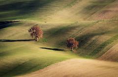 Coppia (SDB79) Tags: molise campagna colline agricoltura alberi onde terra