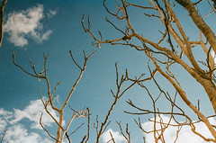 24990004 (foksia07) Tags: film photo travel malta tree clouds