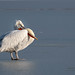 Sometimes my beak is just too heavy!
