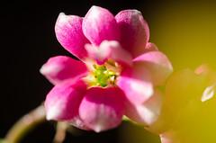 Colorful (Martin Bärtges) Tags: flowers blumen blossoms colorful farbenfroh nikon d7000 nikonphotography nature natur naturfotografie naturephotography nikonfotografie macro macrophotography makro makrofotografie
