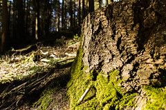 Nature (meyer.morgane7) Tags: flou tronc arbre nature vert foret forest marron brun tree tunk ombre contrast alsace sigma18250 canon 1200d