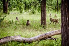 Malawi-Safari-1404