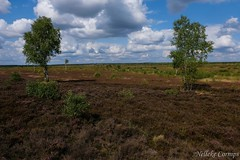 Lüneburg Heathland (Nelleke C) Tags: 2018 buitenlandsweekend excursie lüneburgerheide militairebasismünstersüd duitsland germany heathland heide holiday landscape landschap vakantie