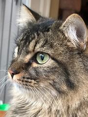 Day 2 of 365 - Bean 2019 (sluggoman) Tags: cat explore kitty fur fluffy