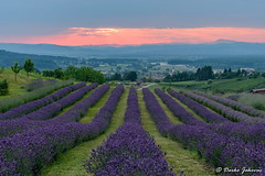 Lavender field (darko.jakovac) Tags: nikon d750 nikond750 sigma 150600 sigma150600 contemporary telephoto dolenjska slovenija slovenia slowenien discover explore trip travel traveling relax view viewpoint ngc outdoor outdoors outside hiking adventure perspective activities roam visit environment explorers ecological nature landscape scenery scenic idyllic beauty beautiful season seasonal unique perfect superb magnificient stunning impressions outstanding popular colors colorful postcard wallpapper countryside rural sivka lavender field purple sky perfection sunset sunsets magic