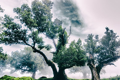 There shall be Light (**capture the essential**) Tags: 2017 fog insel island laurel lorbeer madeira mist nebel pauldaserralowlands sonye18200mmoss sonynex7 wetter wolkenclouds foggy