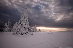 Neige :) (Manonlemagnion) Tags: nature paysage hiver neige frois matin troisfours vosges givre lumière nikond810 1635mmf4