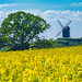 longing for summer... (p_odel) Tags: textures texture summer windmill landscape flower field