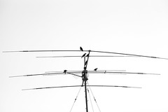 Birds' Parking Lot-4 (zeevveez) Tags: zeevveez zeevbarkan זאבברקן canon antenna bird bw