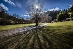 Lights and Shadows (juanjo_rueda) Tags: light landscape tree nature cañonriolobos soria lightandshadows shadow thetreeoflife