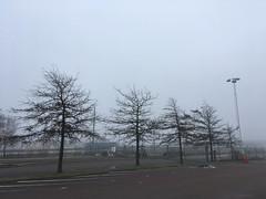 träd (rotabaga) Tags: sverige sweden göteborg gothenburg iphone dimma fog