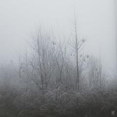 In the Fog II  /05 (KromOner) Tags: kromoner art design minimal dark nature forest trees woods silent solitude silence mood atmosphere quiet canon austria fog foggy mist misty winter