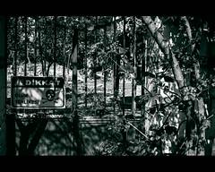 DSC00567 (bmakaraci) Tags: sony sonyalpha a7ii alpha konica 57mm f14 burakmakaraci blackandwhite photograpy primelens photographer prime photo lens new istanbul turkish