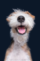 Muppetational (Wieselblitz) Tags: dog dogs dogphotography dogportrait dogphotographer snout nicenosingyou wieselblitz dogsnout bestof2018 2018 muppetational terrier foxterrier mouth happy happiness