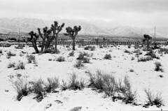 Desert Snow (squirtiesdad) Tags: high desert snow hesperia joshua trees rocksprings trestle ord mountains clouds sky brush landscape selfdeveloped selfscanned nikon fm epson v600 blackandwhite bw bn monochrome analog analogue arista iso100 35mm film