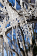 Frozen (StickyToffeeQueen) Tags: frozen frost ice branches icicles