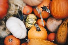 shared with pixbuf (megan-breukelman) Tags: nature fall autumn leaves brooklyn nyc details canon pumpkins squash
