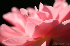 pink flower (event-photos4dreams (www.photos4dreams.com)) Tags: gersprenz münster hessen germany naturschutz nabu naturschutzgebiet photos4dreams p4d photos4dreamz nature river bach flus susannahvictoriavergau susannahvvergau eventphotos4dreams canoneos5dmarkiii canoneos5dmark3