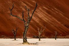 Deadvlei 1 (Tim-Dallos) Tags: africa adventure nikon namibia nature sand dunes trees clay pan deadvlei petrified d750 desert dust