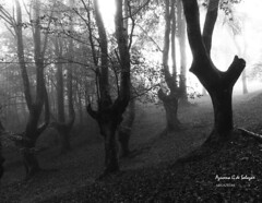 El bosque (azucena G. De Salazar) Tags: forest bosque basoa urkiola parquenaturalurkiola paisvasco euskalherria euskadi basquecountry lainoa niebla fog