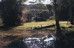 Parque Tingui em Exa 1B (terencekeller) Tags: exa 1b exa1b domiplan 28 50mm 35mm analog v370 fujicolor fujifilm c200