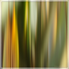 abstract leaves 14/30 (sure2talk) Tags: abstractleaves icm intentionalcameramovement abstract naturalabstract blur nikond7000 nikkor85mmf35gafsedvrmicro april2019amonthin30pictures 1430