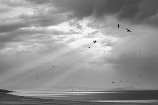 Birds at Antelope Island State Park