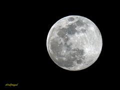 LA LUNA HOY 20-03 -2019 (4) (eb3alfmiguel) Tags: astronomía luna llena la hoy 2003 2019