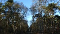 Un Dimanche à la Forêt - Le Madrillet - Rouvray (jeanlouisallix) Tags: rouen saint etienne du rouvray grand quevilly forêt forest arbres nature sousbois allée randonnée sylviculture lumière paysage landscape panorama