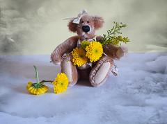 Clara (Smiffy'37) Tags: teddybear mini texture stilllife fun happy closeup tabletop portrait