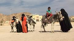 Nomads - Hurghada, Egypt (cattan2011) Tags: egypt hurghada streetpicture streetphoto streetphotography streetart desert donkeys landscapeportrait landscape children egyptianchildren traveltuesday travelphotography travelbloggers travel nomads egyptian