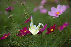 Paper Crane and Cosmos (Errai 21) Tags: ツルとコスモス origami cosmos ツル 折り紙 折り鶴 おりがみ   papercrane 花 flower 花写真 flowerphoto origamiphoto 花が好き tricyrtisformosana コスモス paper crane