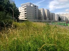 bâtiment-herbe-paris®© (alexandrarougeron) Tags: photo alexandra rougeron urbain ville paris