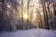 Winter day (prokhorov.victor) Tags: зима природа пейзаж лес деревья снег солнце