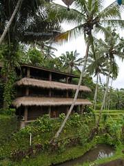 Boni Bali Restaurant (jperthllave) Tags: ubud gianyar nature coconuts plants greenery restaurant boni bali indonesia 1232 panasonic panasoniclumixg12–32mmf35–56asphmegaois lumix